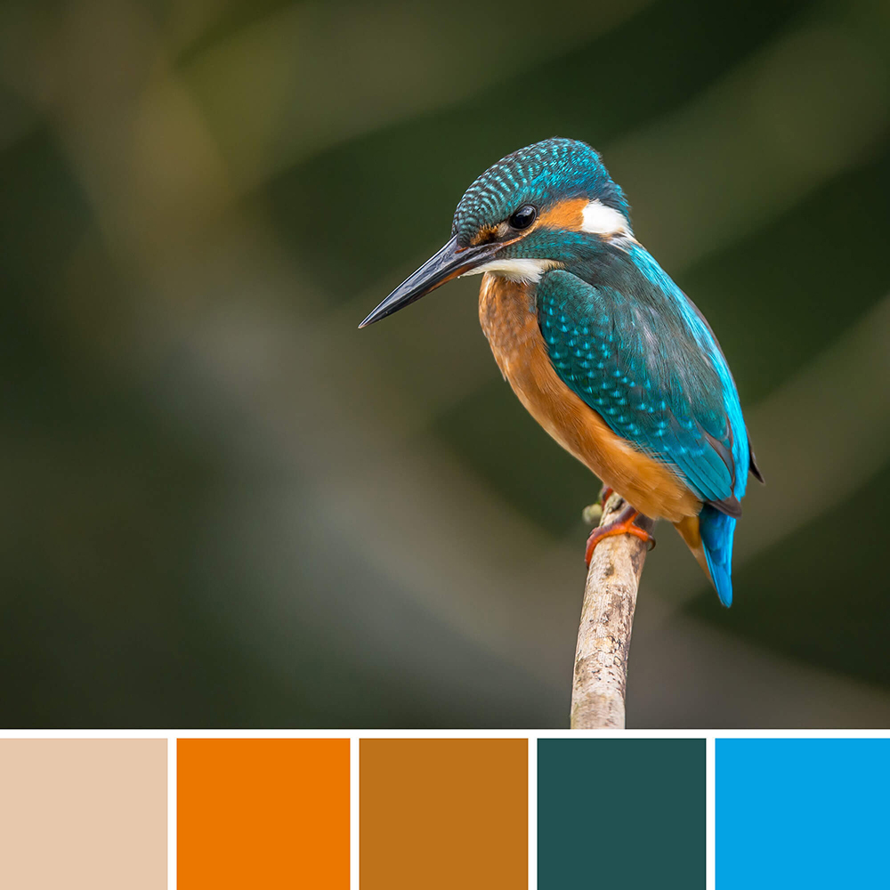 inspirerende kleurenschemas in design - ijsvogel