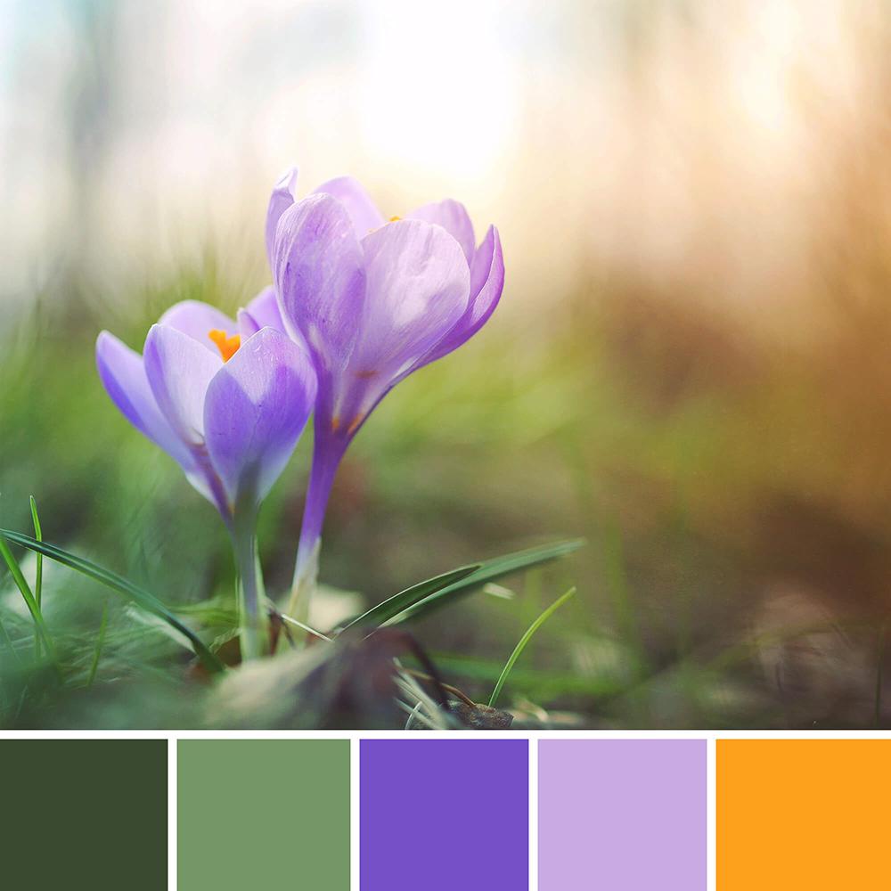 natuur kleur inspiratie bloemen